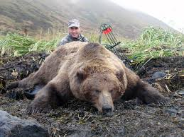 Ozzy The Grizzly Bear Picks The Eagles To Win The Super Bowl Local - i took a top 10 grizzly bear at 15 yds bowhunting net