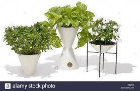 houseplants in modern flower pots stock photo royalty free image