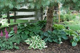 ideas for landscaping around trees home design ideas