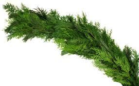 hiawatha evergreens fresh evergreen products