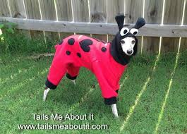 Sheep Dog Costume Halloween 87 Italian Greyhound Costume Images Italian