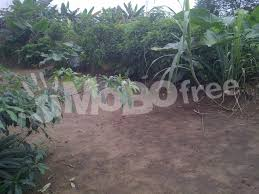 1 and half plots of land for sale land property
