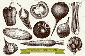 hand drawn vegetables set illustrations creative market