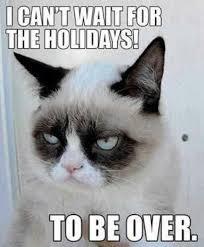 Grumpy Cat Christmas Memes - grumpy cat cute animals pinterest grumpy cat cat and humour