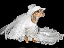dog wedding dress dog dress dress the dog clothes for your pets