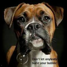 boxer dog in heaven 48 best remembering lily images on pinterest lily boxer love