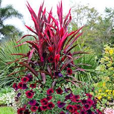 ornamental grass garden club