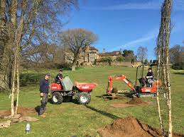 services reeves arboricultural services