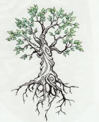 oak tree silhouette grape vine roots search majestic