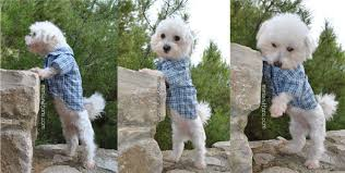 shirt pattern for dog dog sweater sewing patterns image collections coloring pages adult