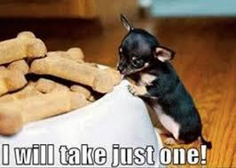 Cute Dog Memes - cutest dog memes image memes at relatably com