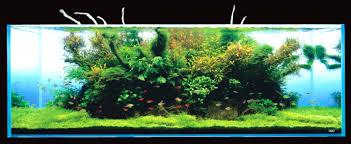 amano aquascape takashi amano s 180x60x60cm and wood aquascape classical