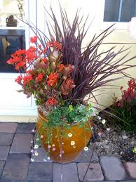 Plant Combination Ideas For Container Gardens - 74 best phormiums images on pinterest garden ideas plants and