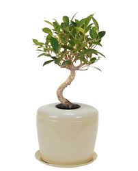 cremation tree ceramic cremation urn for bonsai tree or other plant bonsai urn