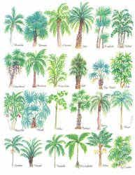 25 Trending Palm Tree Types Ideas On Pinterest Palm Trees