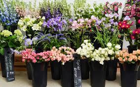 ship flowers mail order flower catalog stems market ship flower program