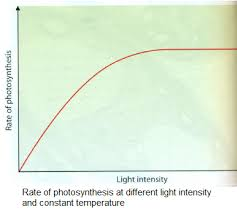 Where Do The Light Independent Reactions Occur 105 Limiting Factors In Photosynthesis Biology Notes For A Level