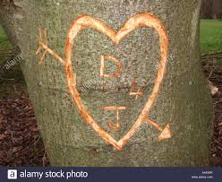 initials carved in tree initials and heart carved into tree bark uk stock photo