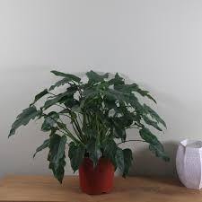 indoor plants images buy indoor plants by waitrose garden