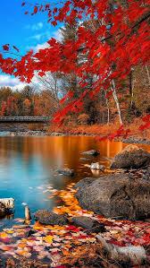 river autumn leaves trees 86849 640x1136 scenery autumn