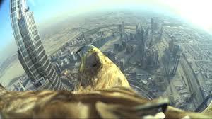Ohio Is It Safe To Travel To Dubai images Dubai world record eagle flight jpg