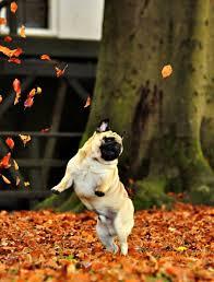 Autumn Memes - 10 puppies who totally love autumn season puptopia nyc blog