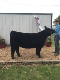 Show Steer Barns 2016 May