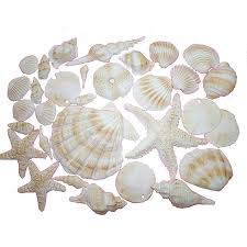 assorted seashells gum paste seashells and more assorted plain let them eat