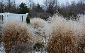 the winter garden is the best or it isn u0027t the obsessive