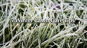 5 winter lawn care tips youtube