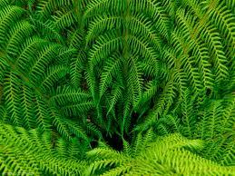 photo of fern logan botanic garden