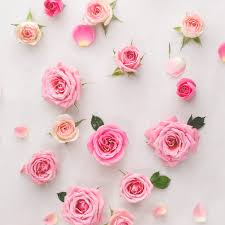 most popular flowers roses a crash course on the different rose varieties