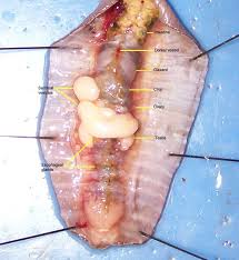 44 best dissection images on pinterest life science science