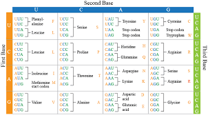 what is the relationship between the sequence of bases in dna and