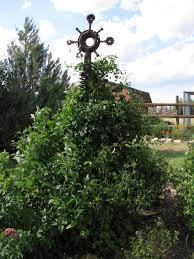 sweet pea cheyenne garden gossip
