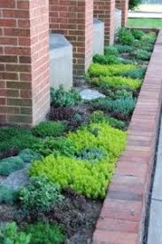 22 best ground cover plants images on pinterest gardening