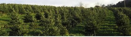 tree farm graver u0027s landscape design llc tamaqua pa