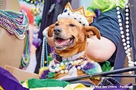mardi gras dog history of mardi gras in lafayette la