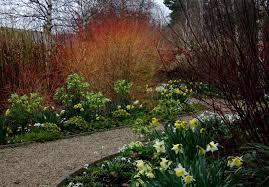 winter garden ideas for northern california winter garden ideas