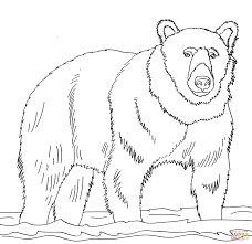 brown bear coloring page online 7092
