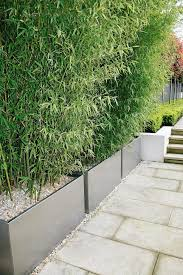 bamboo screening contained within planters no running