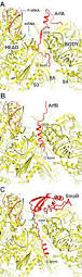 mechanism of ribosome rescue by arfa and rf2 elife lens