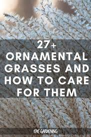 29 ornamental grasses and how to grow them grasses gardens and