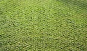 field of grass senn from above ground textures vishopper