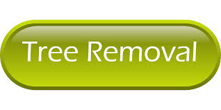portland tree care u0026 tree removal services urban forest pro