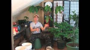 best indoor growing tips youtube