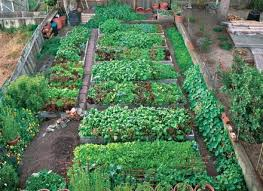 growing vegetables in pots best container vegetable gardening