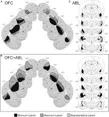 basolateral amygdala lesions abolish orbitofrontal dependent