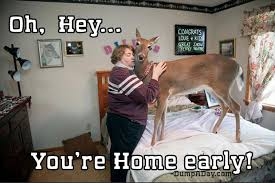 Oh Deer Meme - oh hey you re home early deer dump a day