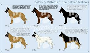 belgian sheepdog breeds belgian malinois colors by mausergirl on deviantart